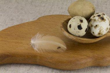 Quail eggs in a wooden spoon