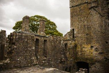Spring in Bective Abbey (Mainistir Bheigti), Ireland.