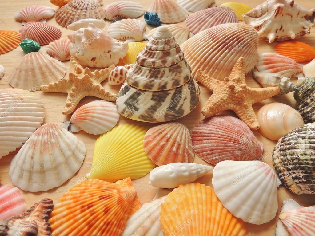 Fondo De Concha De Mar Color Brillante Fotos De Stock C Skef1964 - Fotos-de-conchas-de-mar