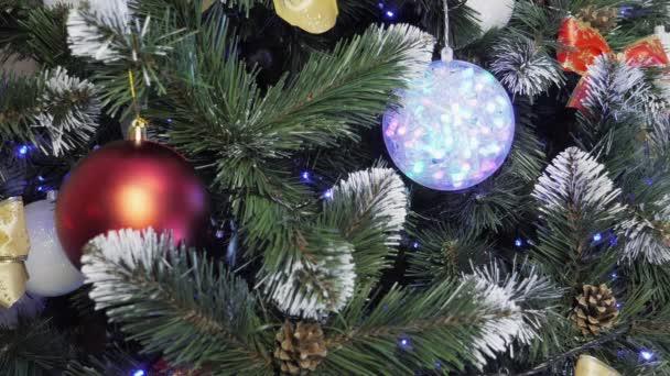 Weihnachtsbaum zum Anfassen
