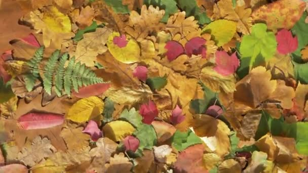 Autumn leaves view from top