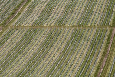 A high angle view of a vineyard in Sussex, on a sunny spring morning