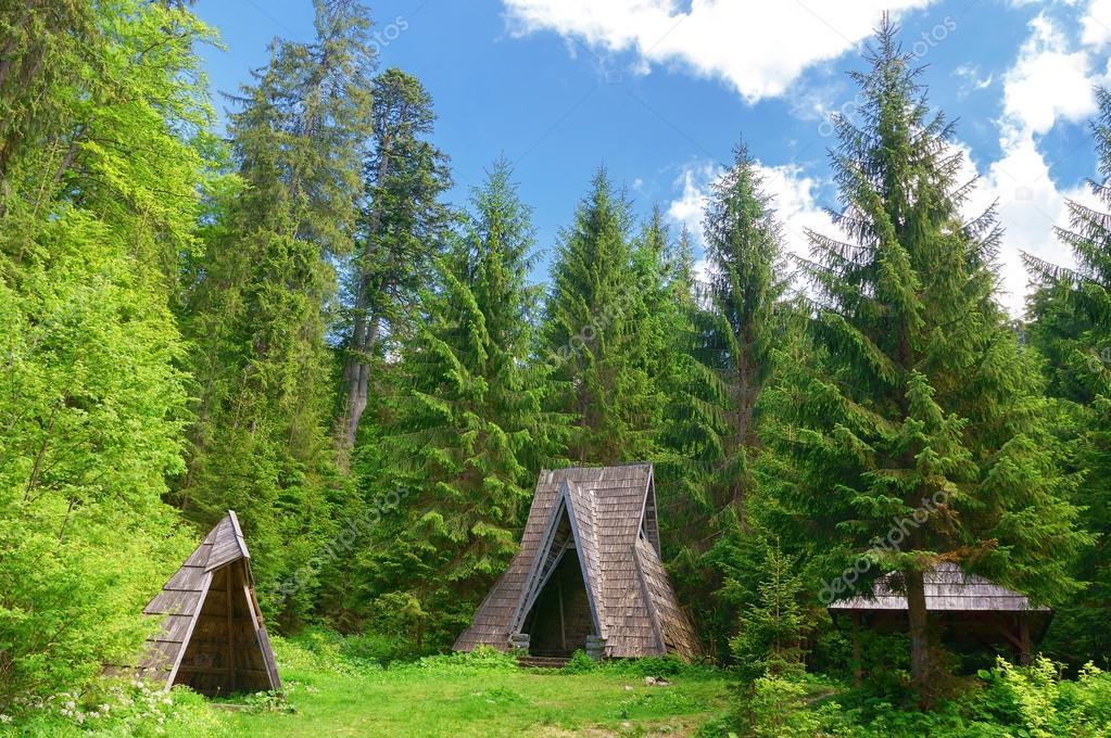 Vieja Cabaña En El Bosque De Coníferas