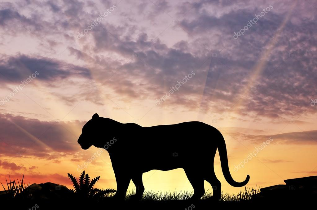 Silhouette of a tiger