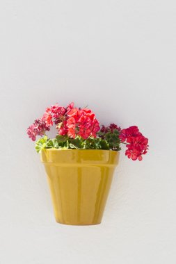 Potted geraniums, Spain