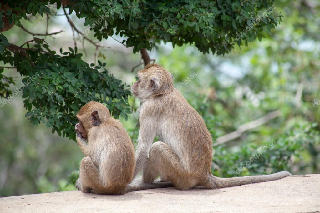 Thai monkey family