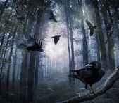 Fotografie Vrány v lese