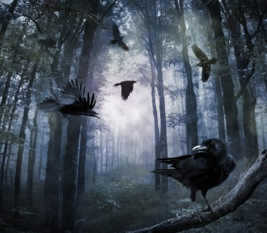 Crows in the forest