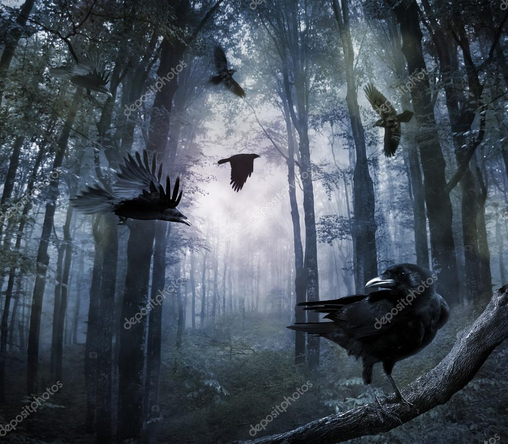 Фотообои Crows in the forest