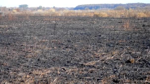 Burn pole se stonky spálené rostlin