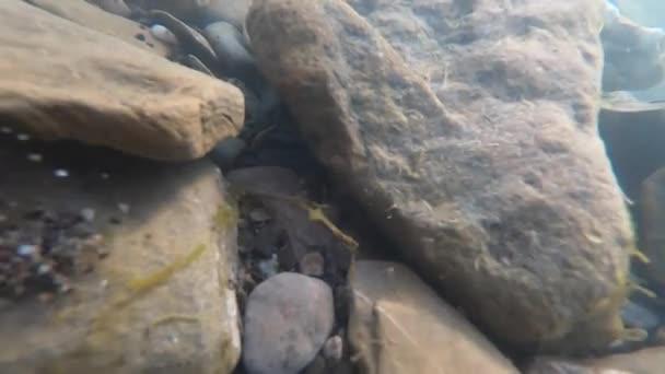 Kameny na dně horské řeky a vzduchové bubliny