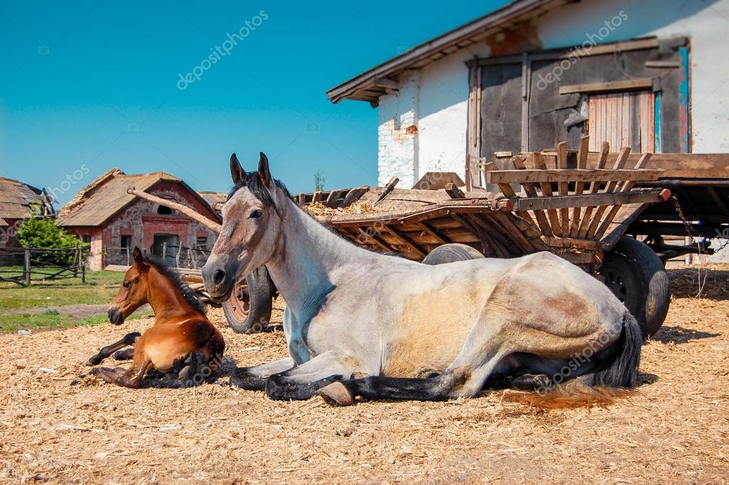 adult mare and foal are about carts on a sunny day