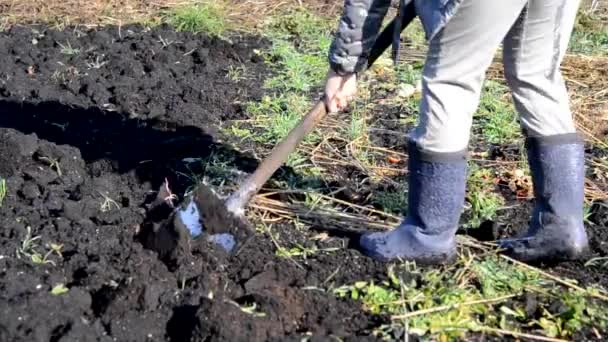 man with a shovel digs his garden