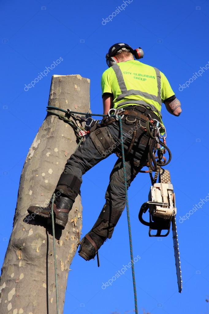 Tree surgeon in a harness
