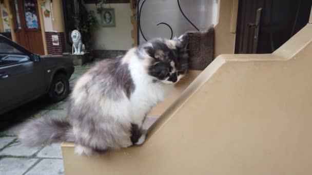Kočka u domu. Čištění vlny.