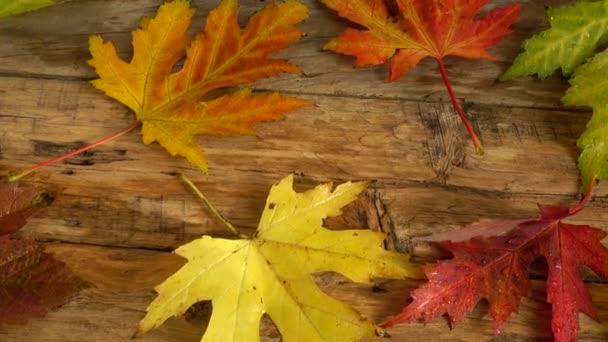 Őszi levelek egy fa vintage táblán.