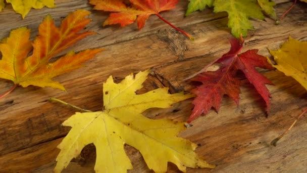 Herbstblätter auf einem hölzernen Vintage-Brett.