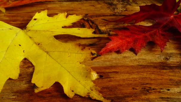 Autumn leaves on a wooden vintage board.