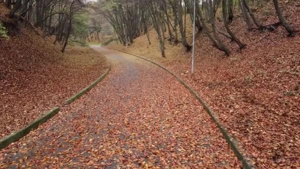 Őszi park novemberben.