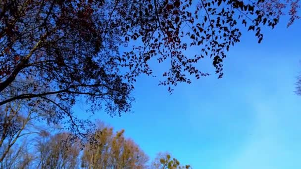 Podzimní stromy na pozadí oblohy. Padající listy.