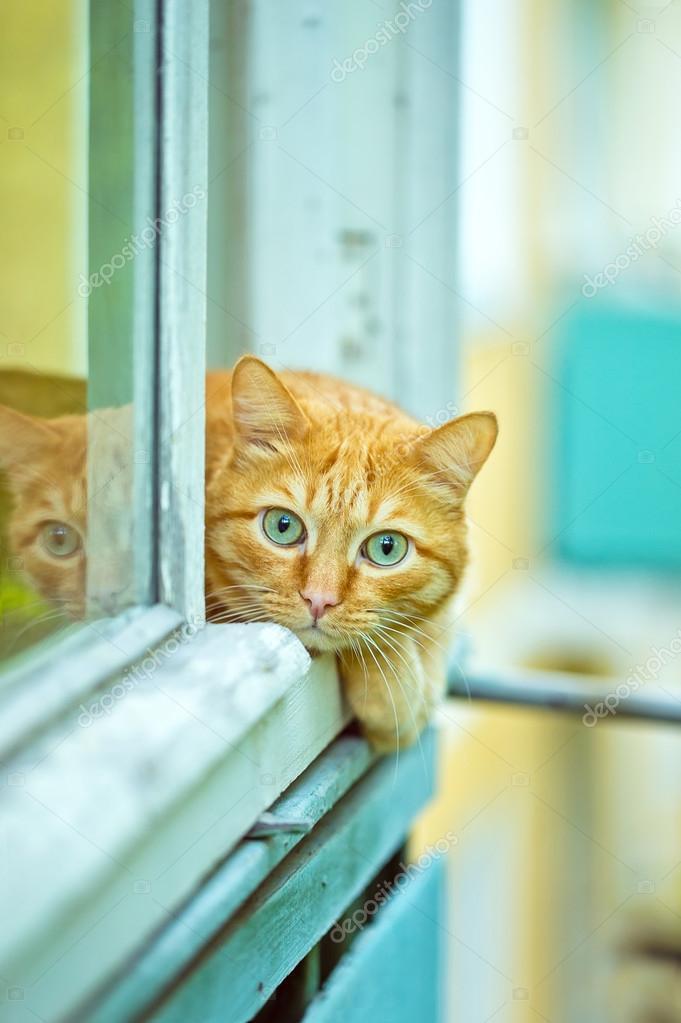 Orange Cat lying on the window sill