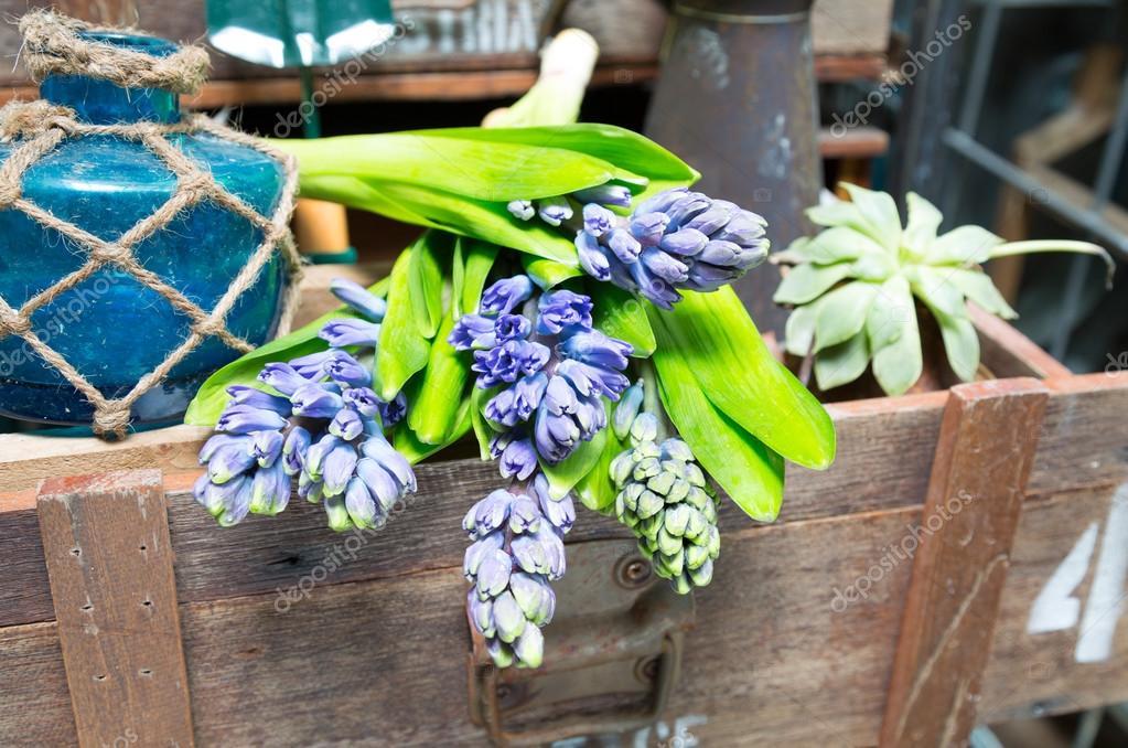 Stilleven Met Hyacint In Vintage Kast Hout Op Rustieke Inte