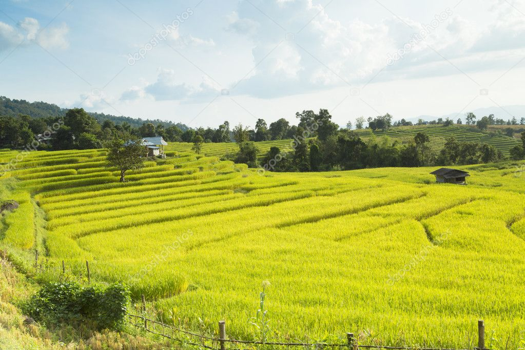 Rice fields on terraced of Mae Chaem, Ching Mai, Northern Thaila