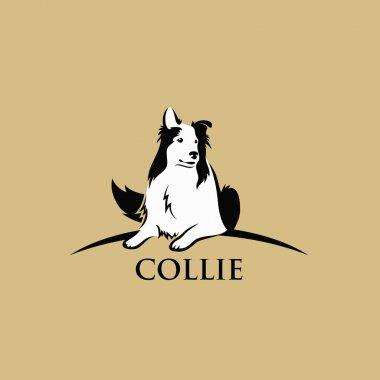 Collie dog on brown