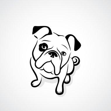 Bulldog isolated on white
