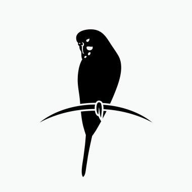 Budgerigar parrot  illustration