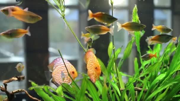 plovoucí ryby v akváriu