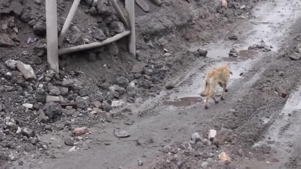 dünne hungrigen Hund auf der Suche nach Nahrung 04