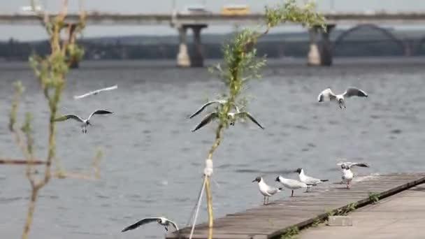 racky letící blízko řeky