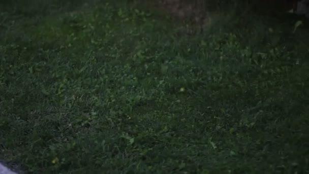 Sekačka na trávu během pracovního dne na zahradě