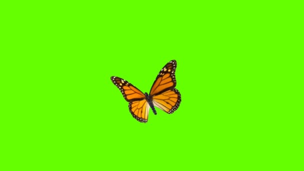 Colorful Butterfly Flying On Green Screen Matte Background 4k Animation Stock Footage. 3D Butterfly Stock Videos.
