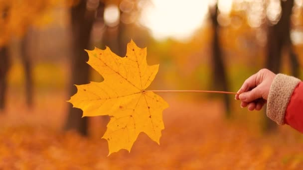 female hand holding yellow maple leaf in autumn forest