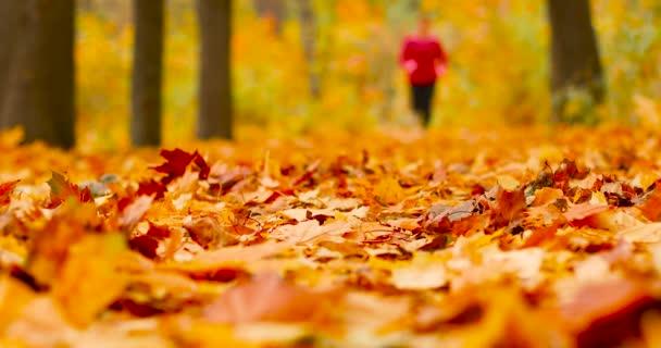 Attraktive Sportlerin in stylischer roter Sportkleidung und grauen Turnschuhen. Rückansicht eines Mädchens beim Cardio-Training im Herbstwald eines Stadtparks. Morgenlauf. Gesundheits- und Sportkonzept