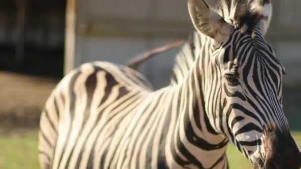 Mladé dítě zebra v národním parku