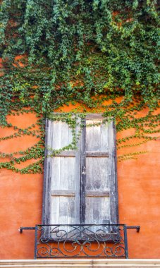 vintage window with ivy