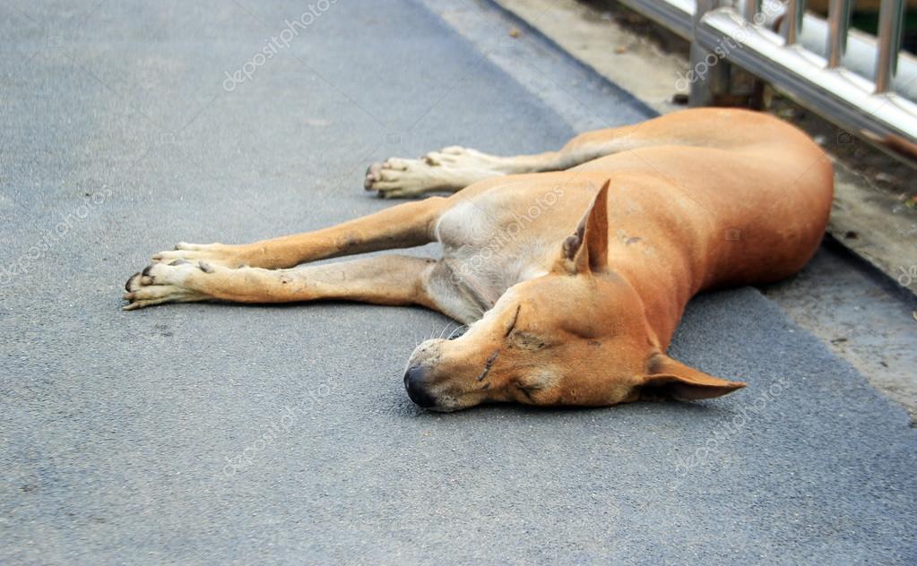 Slapen Op Grond : Zwerfhond slapen op de grond u2014 stockfoto © yanukit #78445528