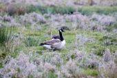 Neuseeländische Vögel