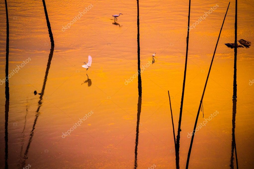 white egret flying