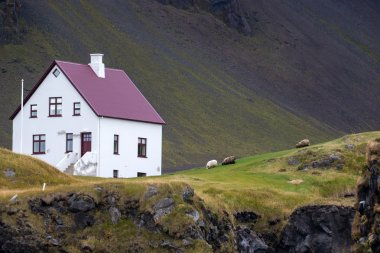 Farmhouse and sheep in iceland