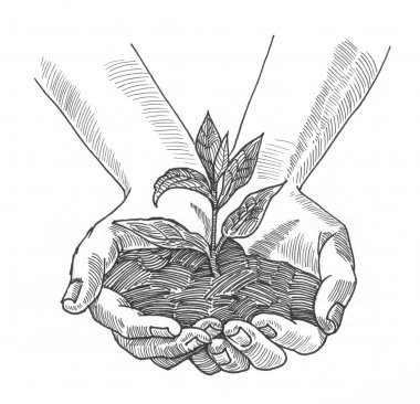 plant in hands pencil painting illustration