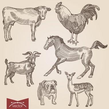 vintage lineart illustration animals set.