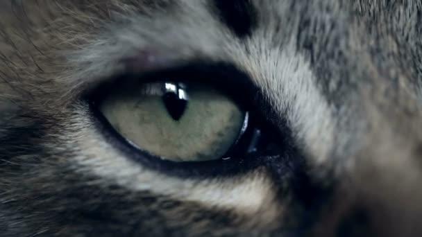 Oko kotě. Extrémní zblízka