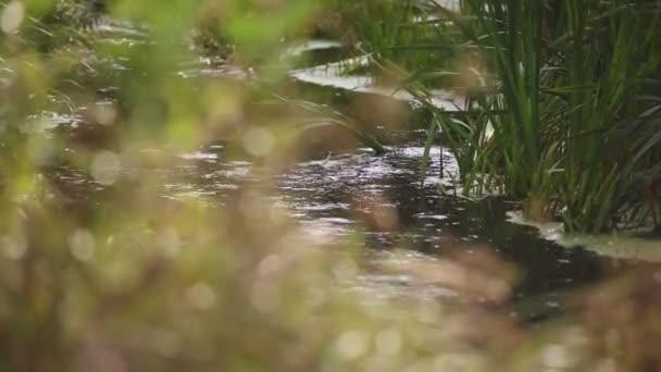 Klidné místo v lese u rybníka