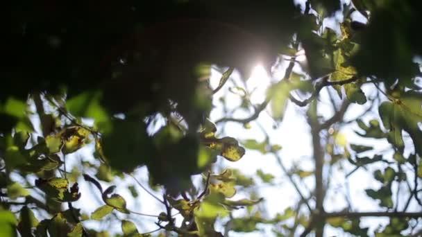 Glare of the sun through the trees