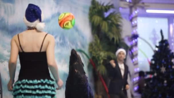 Bělorusko, Minsk - 2014: kožešinová pečeť show v delfináriu s instruktorem. Zpomalený pohyb