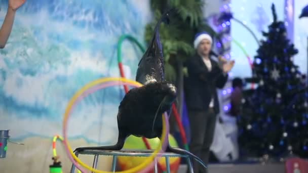 Fur seal show in the dolphinarium with instructor. Slow motion